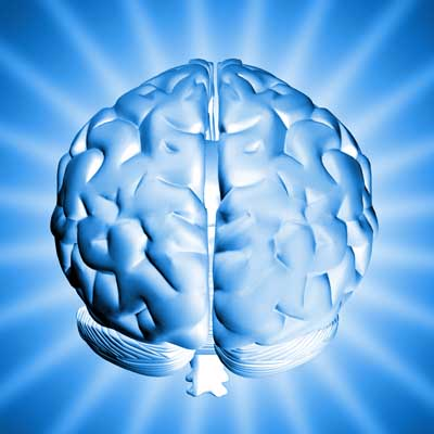 http://i.crn.com/images/brain400.jpg